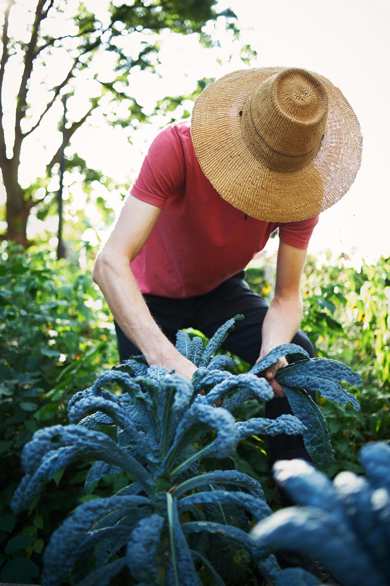 Urban chef gathers ingredients lifestyle agriculture