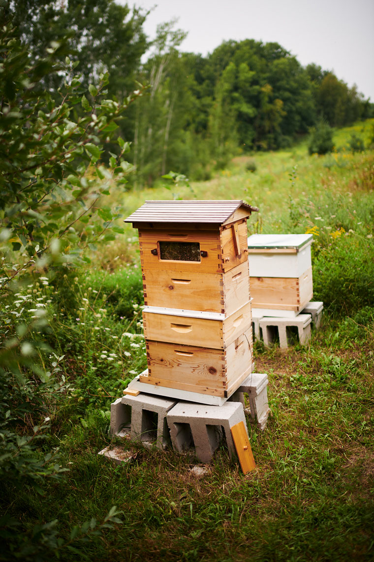 apiary for wild bee honey in door county, WI
