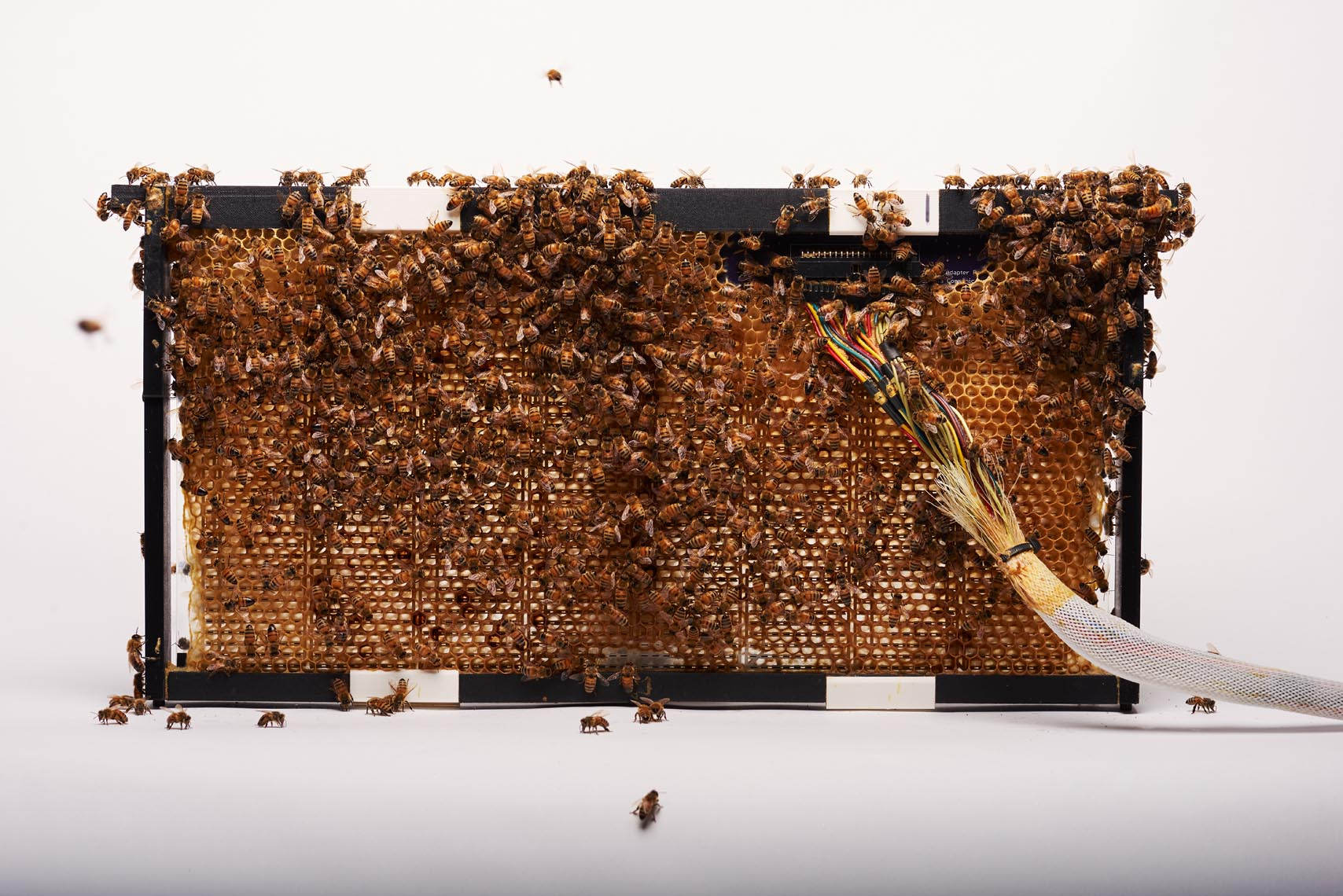 bees converging on techno apiary hive