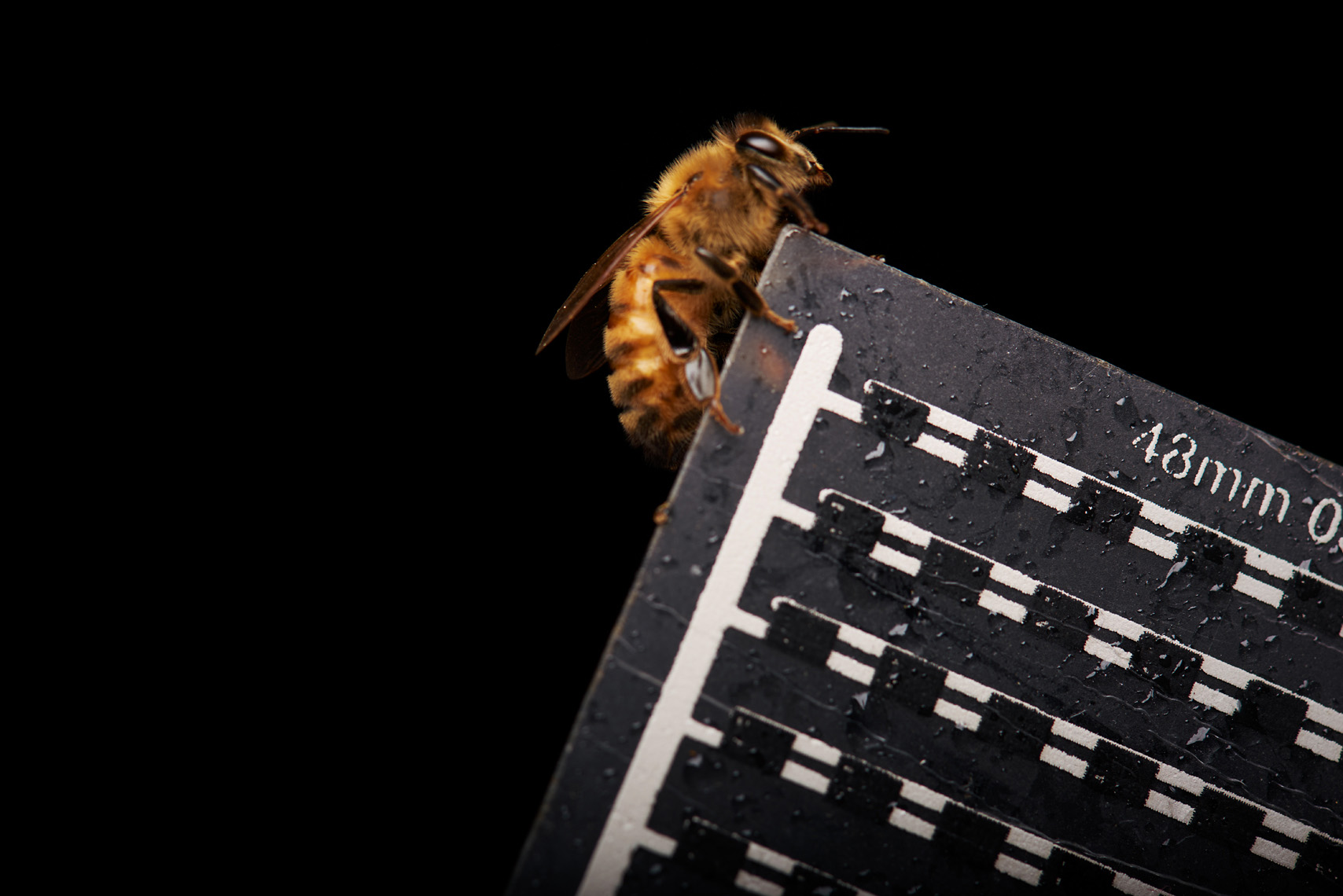 New technology for beehive honey